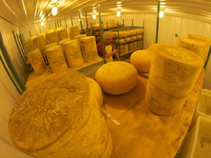 Reynolds in the cheese cave. (Image courtesy of Nature's Harmony Farm)
