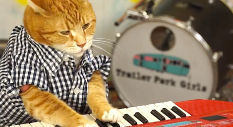 Keyboard cat is back