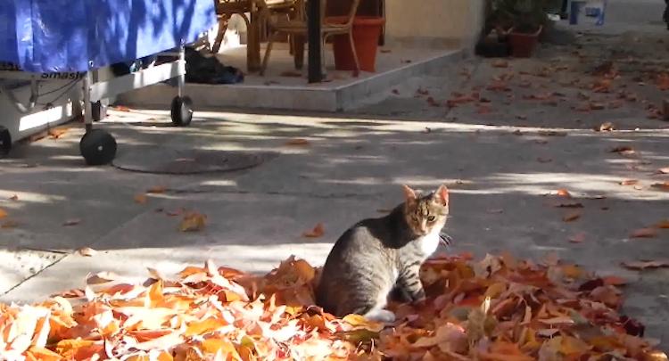 Cat loves fall