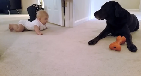 Baby crawls to dog